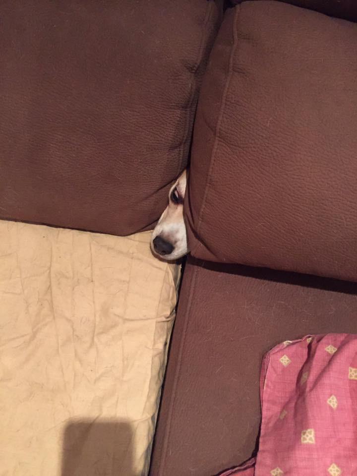 Ruby escondida en su madriguera favorita...