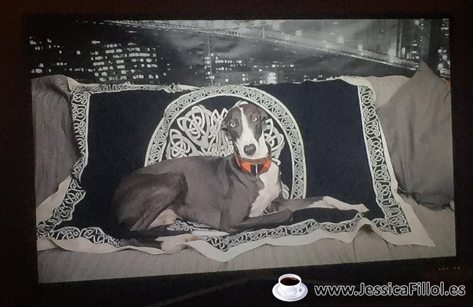 Víctimas instrumentales: utilizar a las mascotas como forma de maltrato #ArgosConMiare